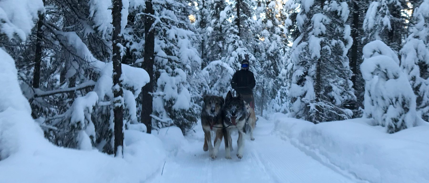 Dog sledding through the forest near Grand Ely Lodge
