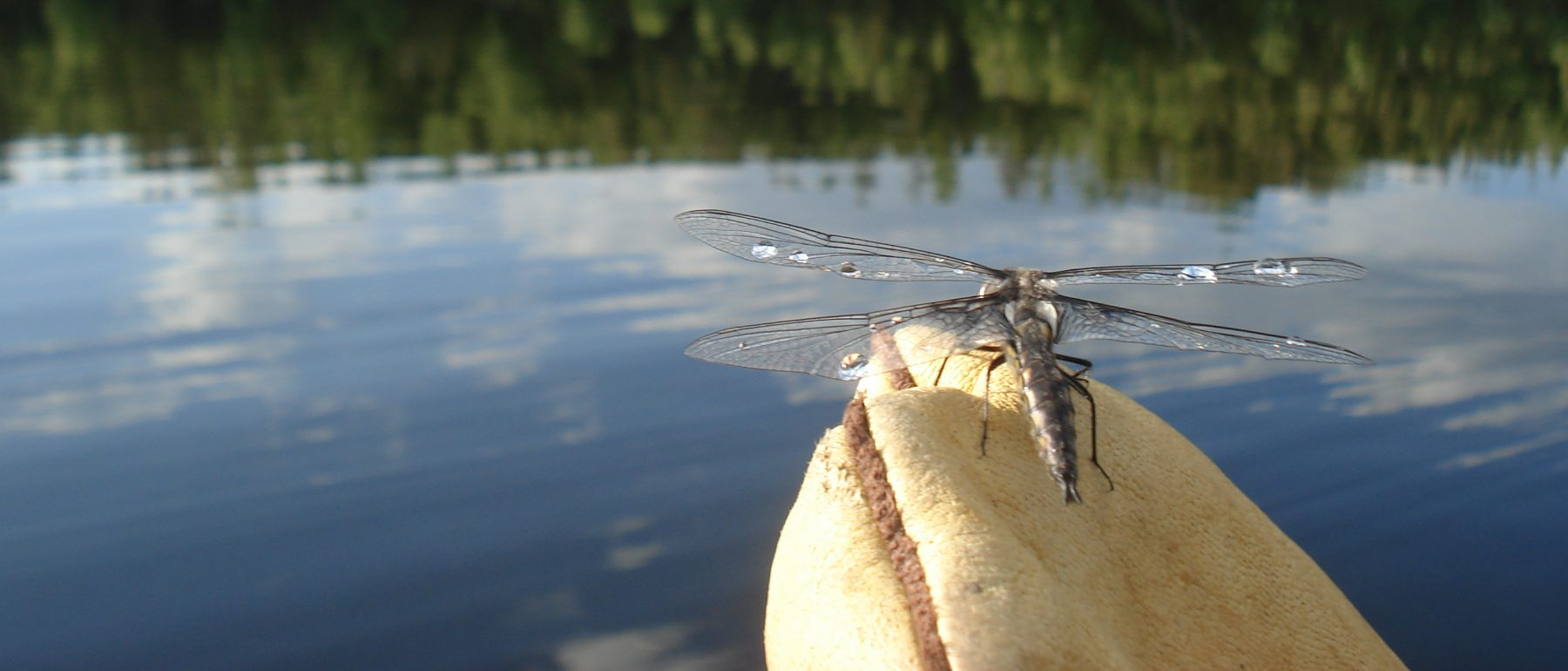 Nature dragon fly