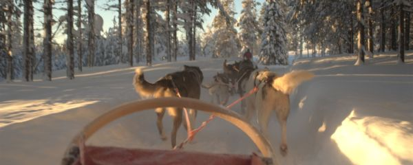 first person view dog sledding in scenic snow trail
